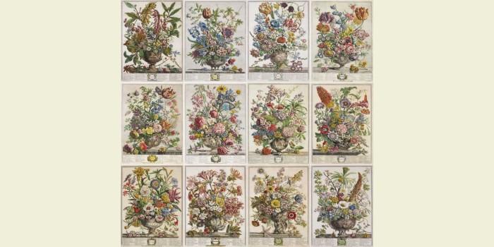 """""""The Year of Flowers"""" Годовой бесплатный SAL"""